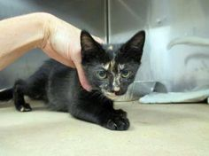 Liv: Only 2 months old and out of time at high-kill upstate shelter