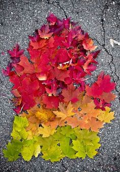 Michigan in the fall is the best! Fall In Michigan, State Of Michigan, Detroit Michigan, Michigan Travel, Michigan Facts, Michigan Colors, Petoskey Michigan, Detroit Art, Lansing Michigan