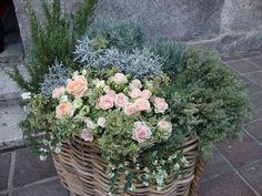 Risultati immagini per addobbi chiesa con piante aromatiche
