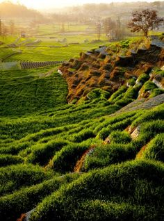 Terraced farms, such as these fields outside Bhaktapur, are a familiar sight in the Kathmandu Valley