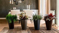 Groen wonen   Planten zonder zorgen met Aqua4weeks - Stijlvol Styling woonblog www.stijlvolstyling.com