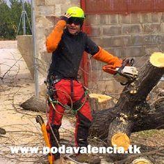 Verticalia. Poda y Tala de árboles y palmeras en Valencia
