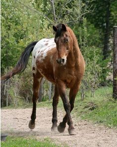 Young At 31…He's an older horse that still runs laps around horses half his age…