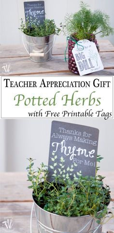 "Gift: Potted Herbs with Tags This is such a beautiful and easy teacher appreciation gift. Free printable gift tags inside potted herbs are a great way to say ""Thank You""."