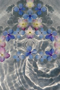 flowers & water ☯