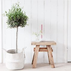 Indoor Plant Tree And Wooden Chair Stool