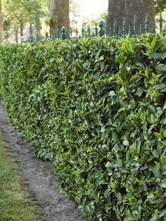 Die 41 Besten Bilder Von Garten Backyard Patio Beautiful Gardens