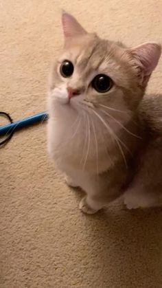 Baby Animals Super Cute, Cute Baby Cats, Cute Little Animals, Cute Cats And Kittens, Kittens Cutest, Funny Kittens, Funny Cute Cats, Cute Cat Gif, Cute Funny Animals