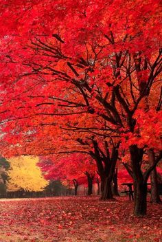 'Red Fall' - photo by tony Lee, via Nami Island in South Korea Autumn Scenery, Autumn Trees, Fall Pictures, Fall Photos, My Photos, Beautiful Landscapes, South Korea, Mother Nature, Nature Photography