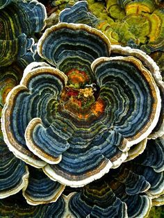Lichen.  Found on Tumblr, not sure who the photographer is.#Repin By:Pinterest++ for iPad#