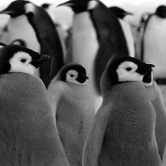 In 1964, photographer Michael Rougier accompanied an expedition to the bottom of the world, where researchers planned to retrace the steps of Sir Ernest Shackleton's legendary World War I-era Antarctic expedition. LIFE magazine would later publish a...