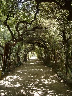 Take a morning stroll in the Boboli Gardens, Florence, Italy. With Magdalen Nabb in Death of a Dutchman