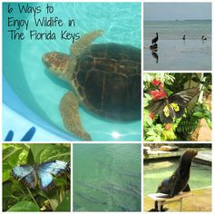 6 Ways to Enjoy Wildlife in the Florida Keys while you make a difference.