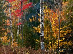 "Zack Clothier Photography | ""PEAKING THROUGH"" in the Adirondacks"