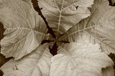 Leaves in their infinity, nature photography, plant photography, JPG, instant download, wall art decor