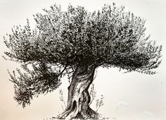 An old ink sketch of an olive tree I completed a few years ago. Tree Of Life Painting, Christmas Tree Painting, Olive Tree Tattoos, All Animals Photos, Tree Branch Tattoo, Tree Sketches, Tree Drawings, Tree Icon, Camera Art