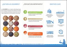 Material promocional | 2016 International Year of Pulses