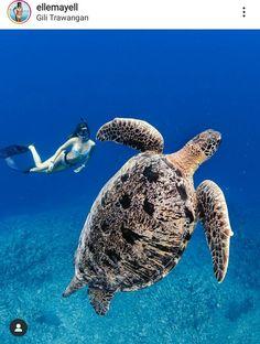 Lombok, Turtle, Animals, Turtles, Animales, Animaux, Tortoise, Animal, Animais