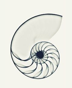 X-ray Nautilus, par l'artiste Cor Ritmeester http://www.ohmyprints.fr/index/86/fr/X-ray-Nautilus/view/37689