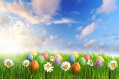 Colorful Easter eggs flowers in the grass blue sky background