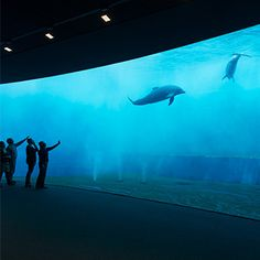 The official website of Acquario di Genova offers a virtual visit to one of the most beautiful exhibition facilities in Italy.