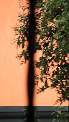 pared#reja#árbol © ontzia