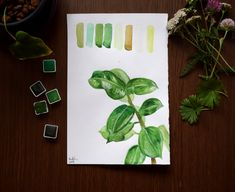 Ficus, Botany, Biology, Illustrations, Painting, Illustration, Painting Art, Paintings, Figs