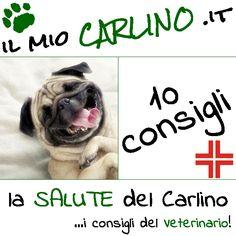 10 CONSIGLI per un Carlino FELICE! www.ilmiocarlino.it/salute-10consigli.htm #carlino #veterinario #cuccioli #carlini