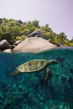 Green Turtle, Over and Under by *leighd  Photography / Animals, Plants & Nature / Aquatic Life	©2010-2013 *leighd