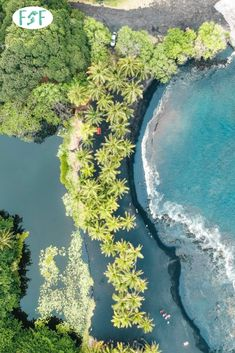 Looking for things to do on the Big Island of Hawai'i? Check out our First Timers Big Island of Hawai'i guide and start planning your trip today! Hawaii Honeymoon, Hawaii Vacation, Hawaii Travel, Vacation Trips, Hawaii Trips, Vacations, Visit Hawaii, Hawaii Hawaii, Whale Watching Season
