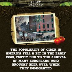 Thankfully, hard cider is only getting more and more popular these days! #NationalAppleMonth #FunFact #AngryOrchard #HardCider #GlutenFree #Infographic