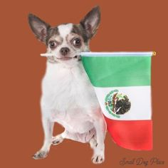 A Small Chihuahua Holding a Mexican Flag Tough Dog Names, Girl Dog Names, Best Dog Names, Puppy Names, Pet Names, Unusual Dog Names, Dogs Names List, Popular Dog Names, Hairless Dog