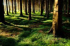 Emerald Green, Clare, Ireland