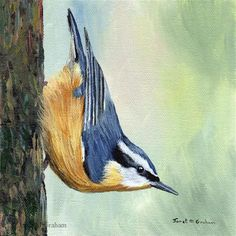 "Daily Paintworks - ""Red Breasted Nuthatch"" - Original Fine Art for Sale - © Janet Graham"