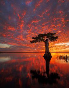 Blaze - Blue Cypress Lake, Indian River County, Florida