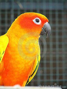 Orange Parrot 2 by Eun Jin Ping Audrey, via Dreamstime