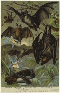 Halloween Style!! Vintage bat poster! Do it up large-scale for the dining room!