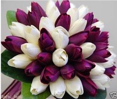 dark purple wedding flowers, awesome bouquet with red instead of white Tulip Wedding, Purple Wedding Flowers, Purple Tulips, White Tulips, White Roses, Beautiful Flowers, Anemone Wedding, Fresh Flowers, White Flowers