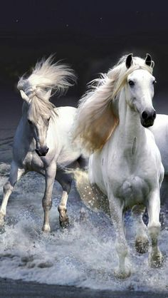 Gorgeous horses!                                                       …