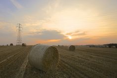 Fresh After the Harvest... by TRM-photography.co.uk, via Flickr
