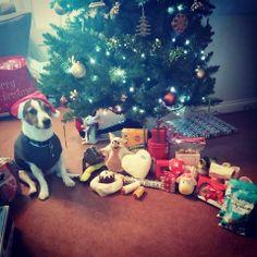Oscar's second Christmas