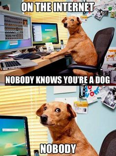 Check out: Animal Memes - Nobody knows. One of our funny daily memes selection. We add new funny memes everyday! Memes Humor, Funny Dog Memes, Funny Dogs, Funny Shit, Funny Drunk, Pet Memes, Funniest Memes, Funny Stuff, Funny Animal Videos