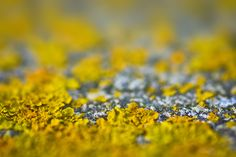 LICHEN The Outsiders, Colours, Artist, Nature, Nature Illustration, Off Grid, Artists, Mother Nature
