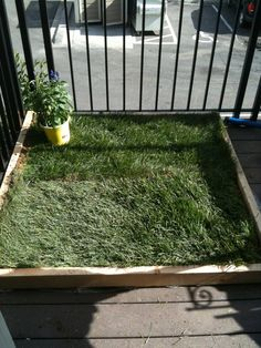 DIY dog potty patch for patio. I might do this so I don't have to take my old girl out to walk as often.
