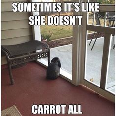 #puns #punny #sillypuns #sillypunny #sillypunny #sillyhumour #sillymeme #cleanhumour #cleanhumor #animalpuns #animalpun #bunnyhumour #bunnyhumor #bunnymeme