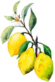 Beautiful painting of lemons // For my tin can project
