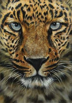 leopard art work leopard oil painting How to Paint Animals - Wildlife Art and MORE! Wildlife Paintings, Wildlife Art, Animal Paintings, Animal Drawings, Beautiful Cats, Animals Beautiful, Gato Grande, Tier Fotos, African Animals