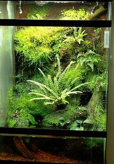 Pin by Teresa Allison on Ashleys Garden Terrarium