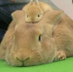 Lazy day lounging about on Mom! and baby tv en anglais cantece, and pets klinic swindon town soccerway news. Cute Funny Animals, Cute Baby Animals, Animals And Pets, Animals Photos, Animal Babies, Tier Fotos, Hamsters, Cute Animal Pictures, Cute Creatures