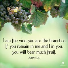 Jesus: The vine Us: The branches By abiding in Jesus, Jesus will abide in us. Fruit: I think the fruit is people that we have led to Christ. Bible Truth, Bible Verses Quotes, Encouragement Quotes, Faith Quotes, Wisdom Quotes, Life Quotes, Scripture Verses, Bible Scriptures, Biblical Verses